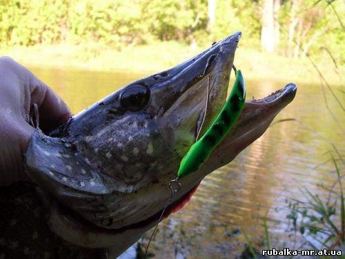 Лов Риби На Річках Горинь